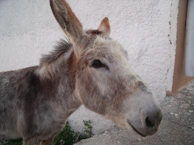 Donkey DSCF3386